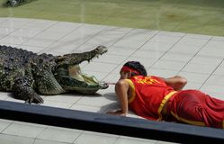 Landscape. PHUKET THAILAND - 16 DEC 2013 crocodile show at Phuket Zoo in Phuket Thailand Stock Images
