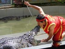 Landscape. PHUKET THAILAND - 16 DEC 2013 crocodile show at Phuket Zoo in Phuket Thailand Stock Image