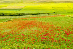 Landscape of Piano di Castelluccio Royalty Free Stock Images
