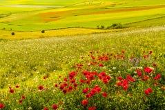 Landscape of Piano di Castelluccio stock photos