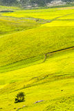 Landscape of Piano di Castelluccio Royalty Free Stock Image