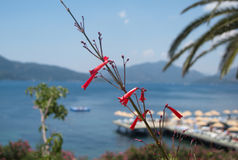 Landscape of pictorial Marmaris Bay, Turkey, with beach dock Royalty Free Stock Photography