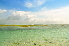 Landscape picture of coral reef. On Gerger beach, Bali Stock Photo