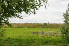 Landscape picture of a farm pasture enclosed by rustic wooden fencing. Landscape picture of a farm pasture enclosed by rustic wooden fencing Royalty Free Stock Image