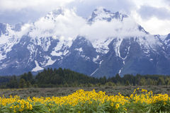 Landscape picture of Grand Tetons Mountain Range Stock Image