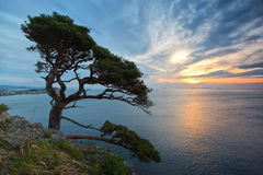 Landscape with pine. Stock Photos