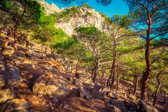 Landscape with pine forest and stones in mountains. Landscape with pine forest and big stones in mountains royalty free stock photo
