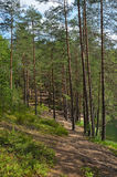 Landscape with pine forest Stock Photos
