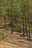 Landscape with pine forest Stock Photography