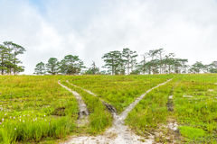 Landscape with pine forests and meadow Royalty Free Stock Photos