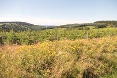 Landscape with a pine plantation. Stock Image