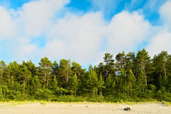 Landscape with pine tree forest growing on dunes at Baltic sea shore and white cumulus clouds on blue sky. Royalty Free Stock Images