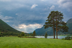 Landscape with pine tree, lake and storm sky, Norway. Landscape with big pine tree, lake, meadow and storm sky, Norway Royalty Free Stock Image