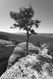 Landscape with pine tree between rocks in Soria, Spain. Vertical Royalty Free Stock Image