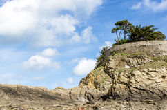 Landscape with a pine trees on a cliff Royalty Free Stock Photos