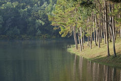 Landscape with pine trees lake Stock Image