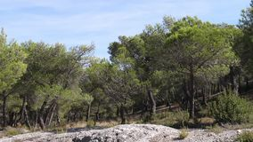 Landscape with Pine trees near Maussane Les Alpilles in the South East of France,. Slow motion stock video footage