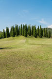 Landscape of pines. On hill stock photography