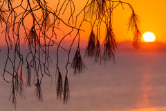 Landscape with Pinetree at Sunset, Sithonia, Greece. Sunset with pinetree in Sithonia, Chalkidiki, Greece Stock Photos