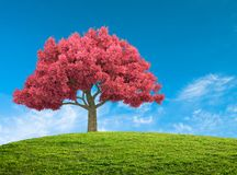 landscape with pink blossom tree Stock Photo