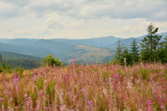 Landscape with pink flowers and mountains Royalty Free Stock Photo