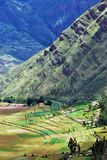 Landscape in Pisac in the Urubamba valley royalty free stock photos