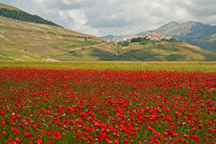 Landscape of the plain of Castelluccio, in Italy Royalty Free Stock Photography
