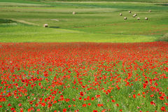 Landscape of the plain of Castelluccio, in Italy Royalty Free Stock Photo