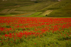 Landscape of the plain of Castelluccio in Italy Stock Images
