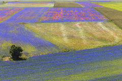 Landscape of the plain of Castelluccio in Italy Royalty Free Stock Photo