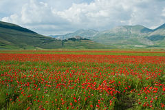 Landscape of the plain of Castelluccio, in Italy Stock Images