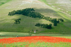 Landscape of the plain of Castelluccio, in Italy Royalty Free Stock Images