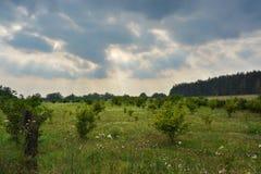 Landscape plantation Stock Images