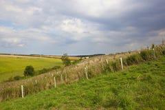 Landscape and plantation Stock Images