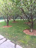 Landscape plantings shrub. Shady planting decorate Stock Photography