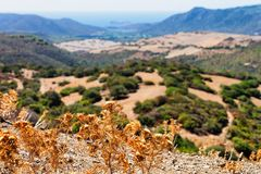 Landscape with plants in Teulada Cagliari Sardinia island. Landscape with plants in Teulada, Cagliari province, Sardinia island, Italy royalty free stock photo