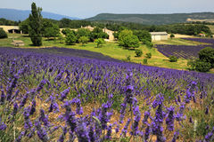 Landscape, Plateau of Valensole, Provence Royalty Free Stock Photography