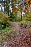 Landscape in Poiana Brasov Stock Photo