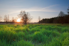 Landscape in Poland. Blue sky and green landscape in the poland Stock Photo