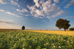 Landscape in Poland Stock Photo
