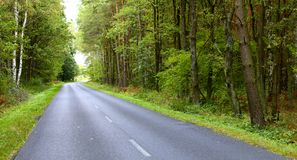 Landscape in Poland asphalt road in forest early autumn Stock Photos