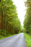 Landscape in Poland asphalt road in forest early autumn Royalty Free Stock Photos