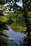 Landscape with pond. Sun shines through folliage royalty free stock photo