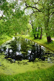 Landscape with pond. Calm corner in a park Royalty Free Stock Images