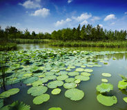 Landscape of pond Royalty Free Stock Images