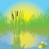 Landscape with pond, grass, bulrush, sunrise stock illustration