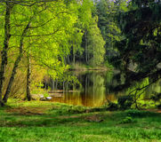 Landscape with pond. HDR landscape with pond, forest and trees Stock Images
