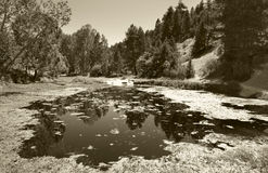 Landscape with pond and pine forest in Spain. Sepia tone Stock Photo