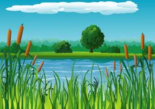Landscape with pond. Summer landscape with pond and reeds Stock Photos