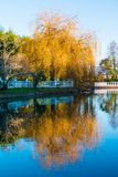 Landscape of pond and trees in Southern Culture Park, Sochi. Beautiful landscape of pond and trees in the Adler Southern Culture Park in sunny day, Sochi, Russia royalty free stock photo